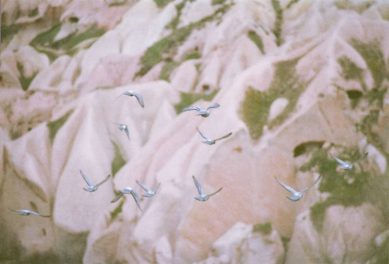 Capbirds
